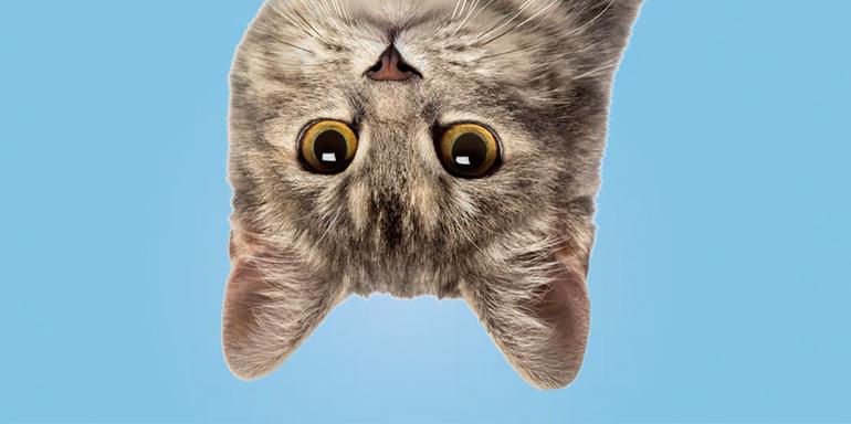 Cat's Pride: Social Media Highlights